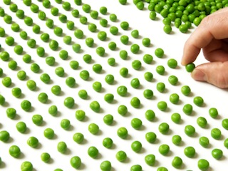 Counting Peas smaller file size.jpg